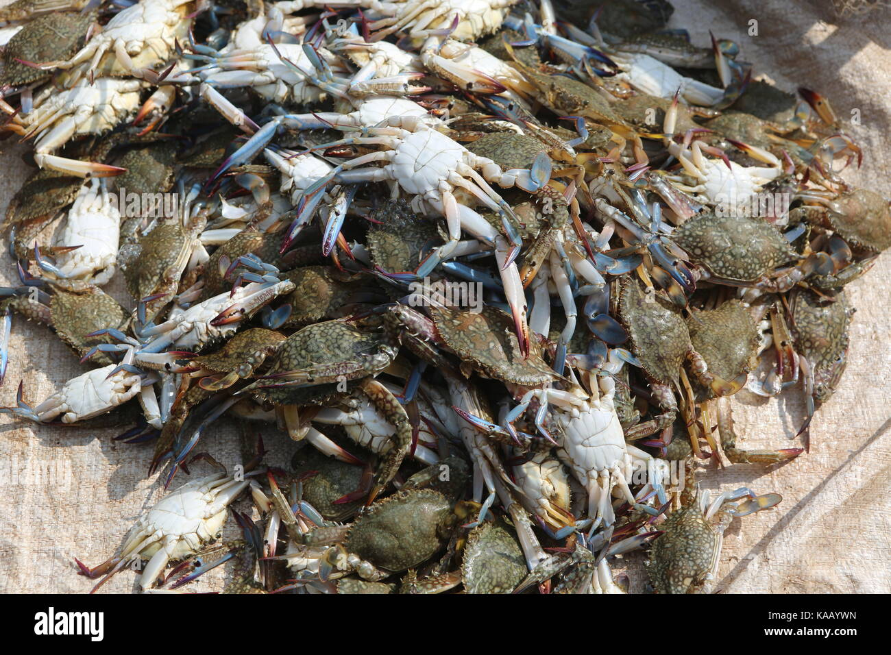 Asian Crabs on a market - Stock Image