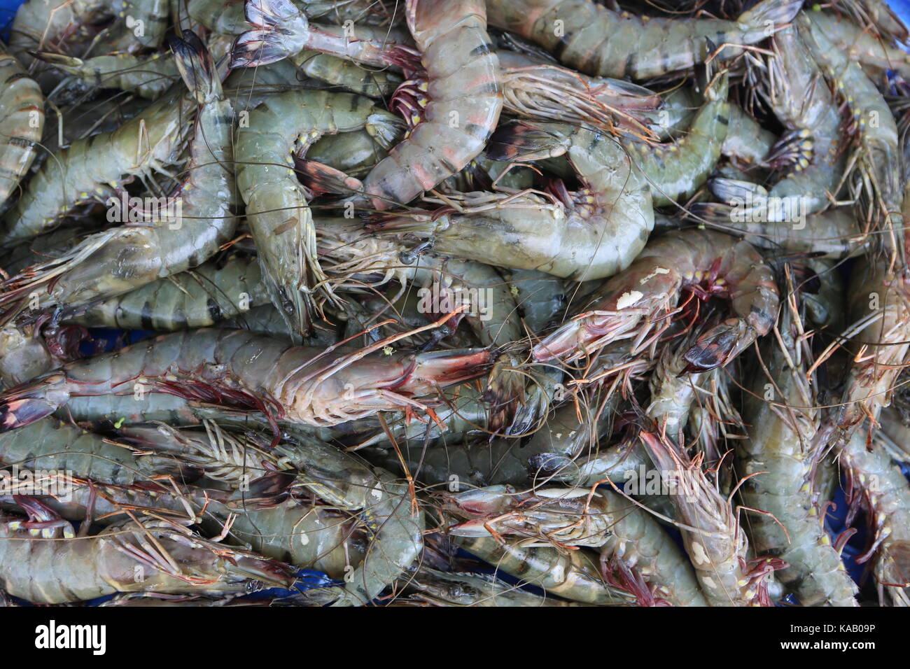 Hintergrundbild Shrimps tiger Prawns roh auf einem Markt - Stock Image