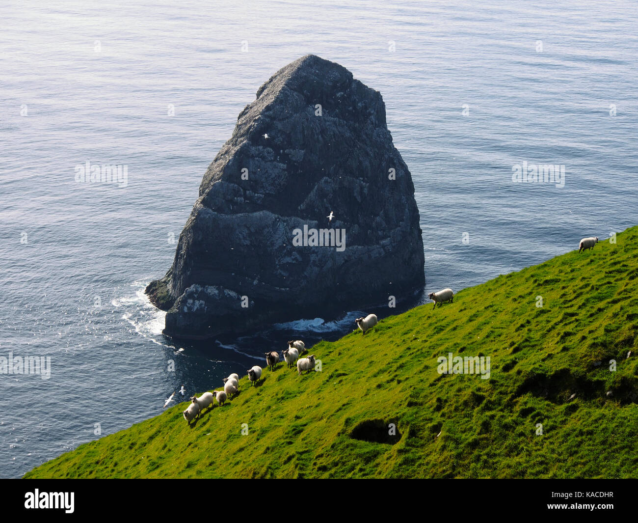 Stac Lee and sheep from Boreray, St Kilda, Scotland - Stock Image