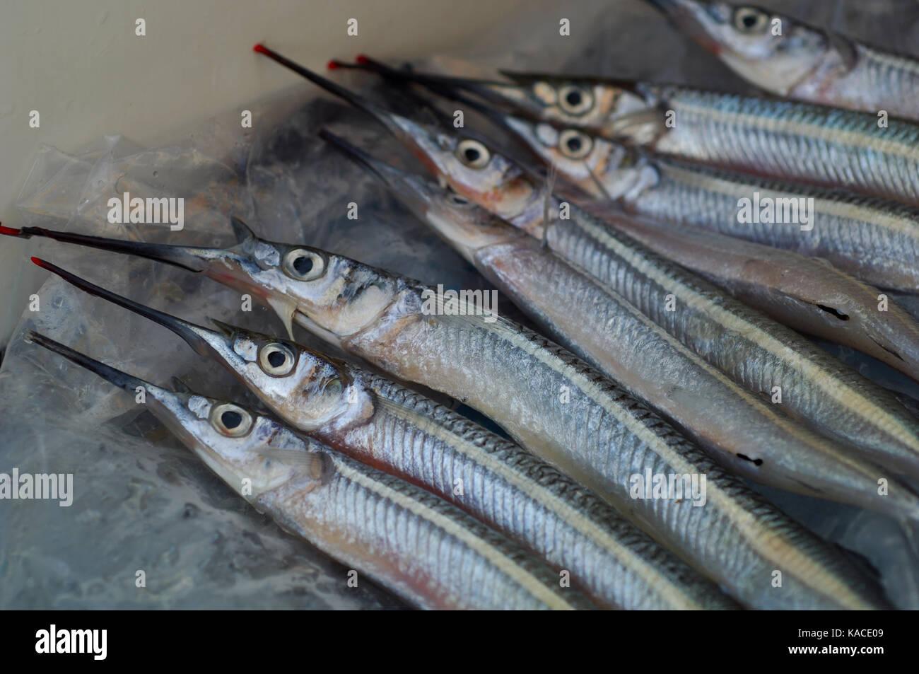 Ballyhoo Bait Fish Stock Photos & Ballyhoo Bait Fish Stock