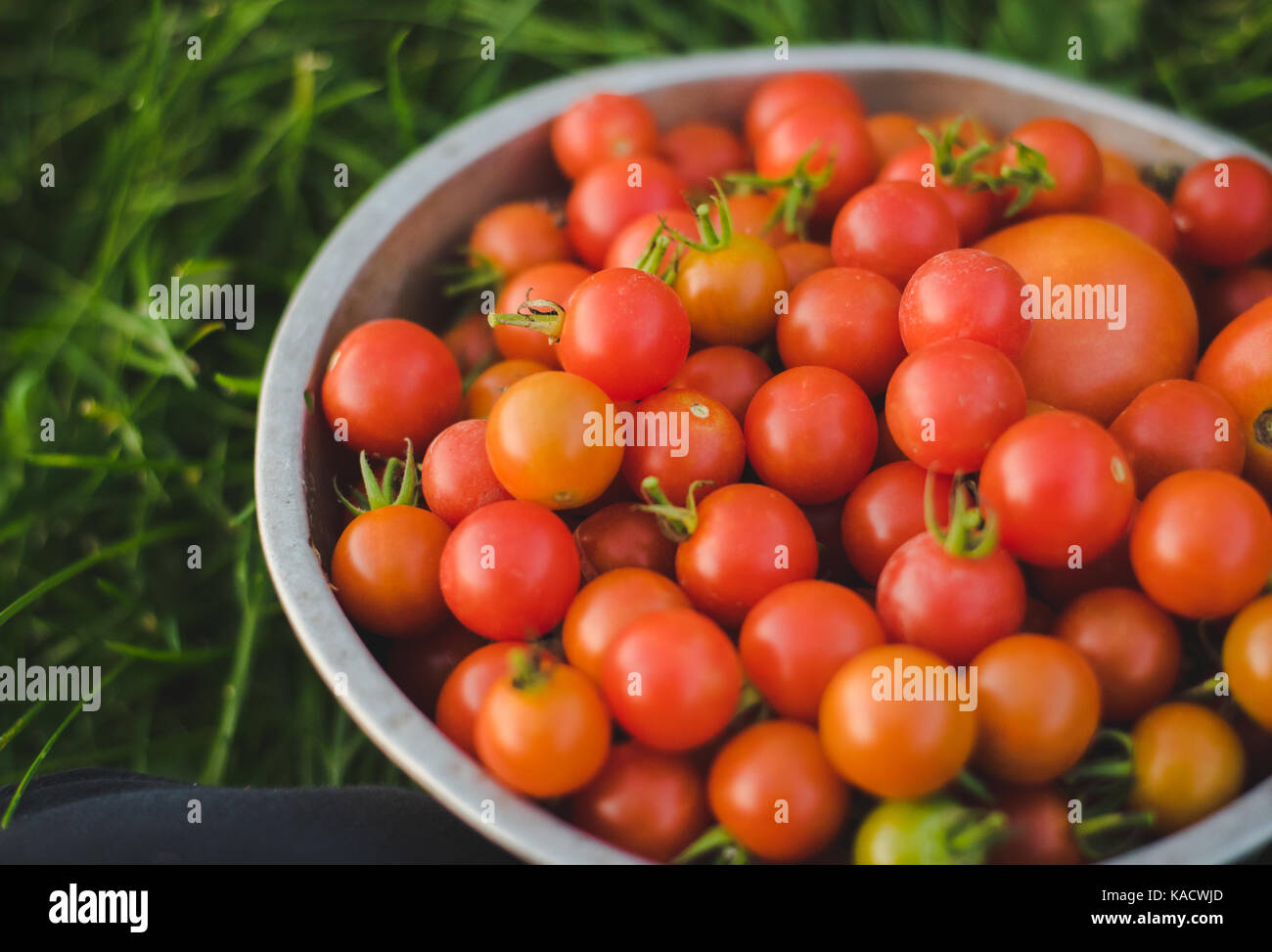 Fresh cherry tomatoes in a colander. - Stock Image