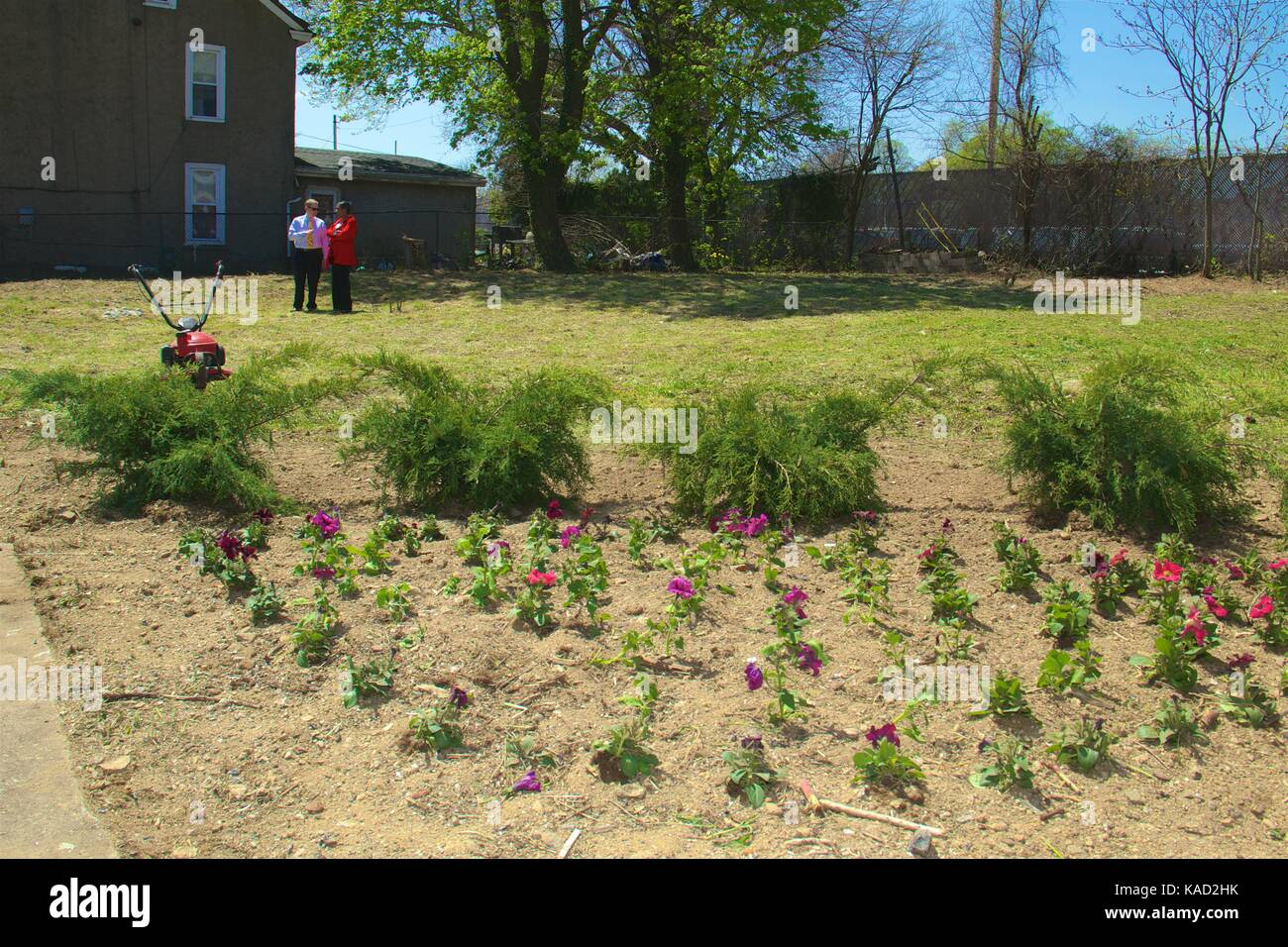 April 26, 2013 - Philadelphia, PA, USA: Volunteers plant a small ornamental garden at the corner of a newly cleaned - Stock Image