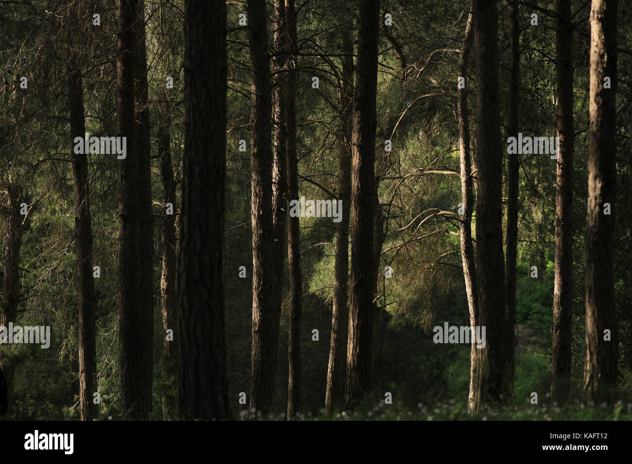 green forest abstract with motion blur - Stock Image