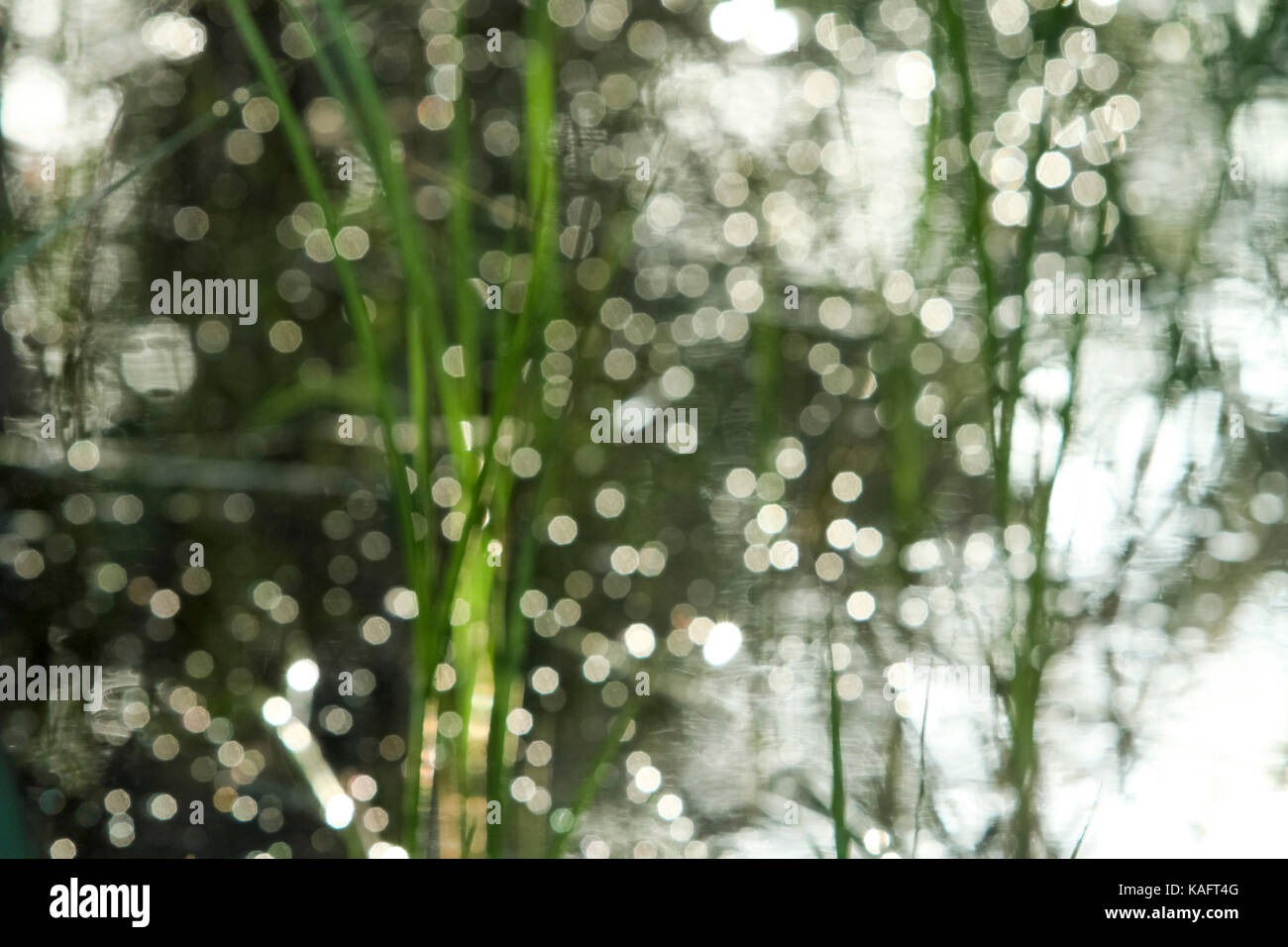 Mystical forest - close up of lush green leafs - Stock Image