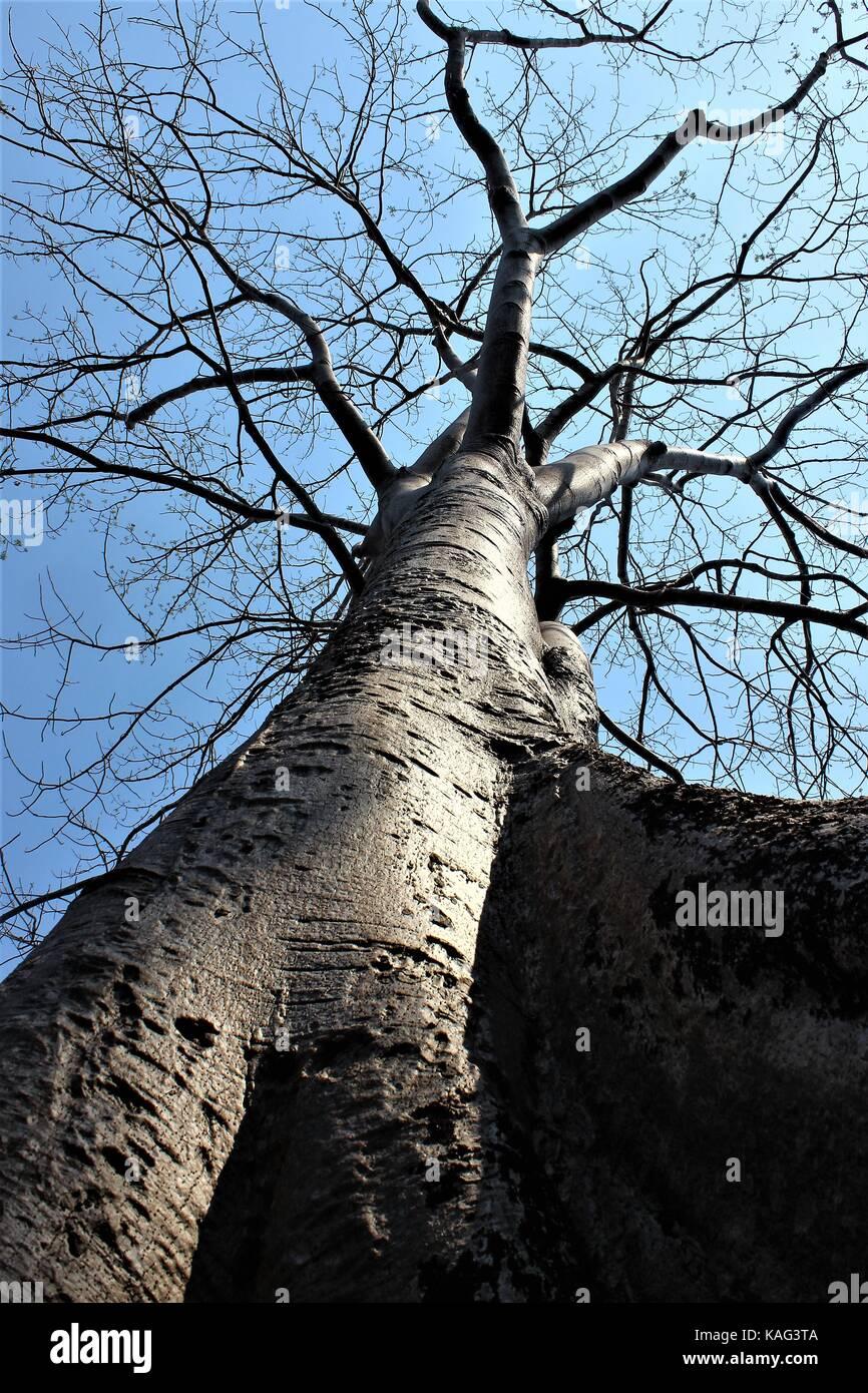 Mighty tree at Angkor Wat - Stock Image