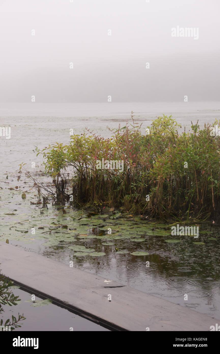 Ponkapoag Pond in the Mist. - Stock Image