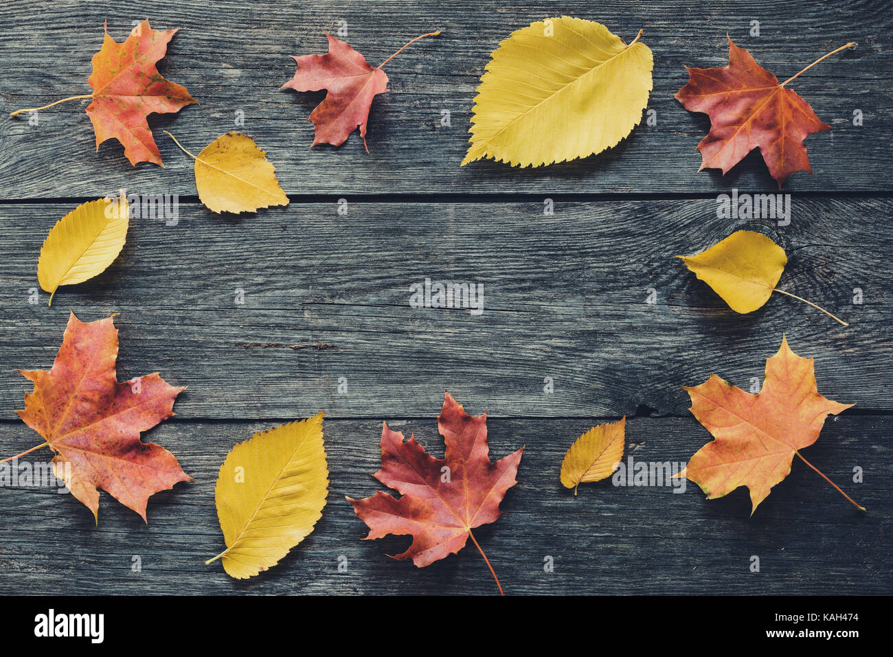 Autumn frame composition with fallen leaves on wooden background with copy space for text. Thanksgiving, Halloween, - Stock Image