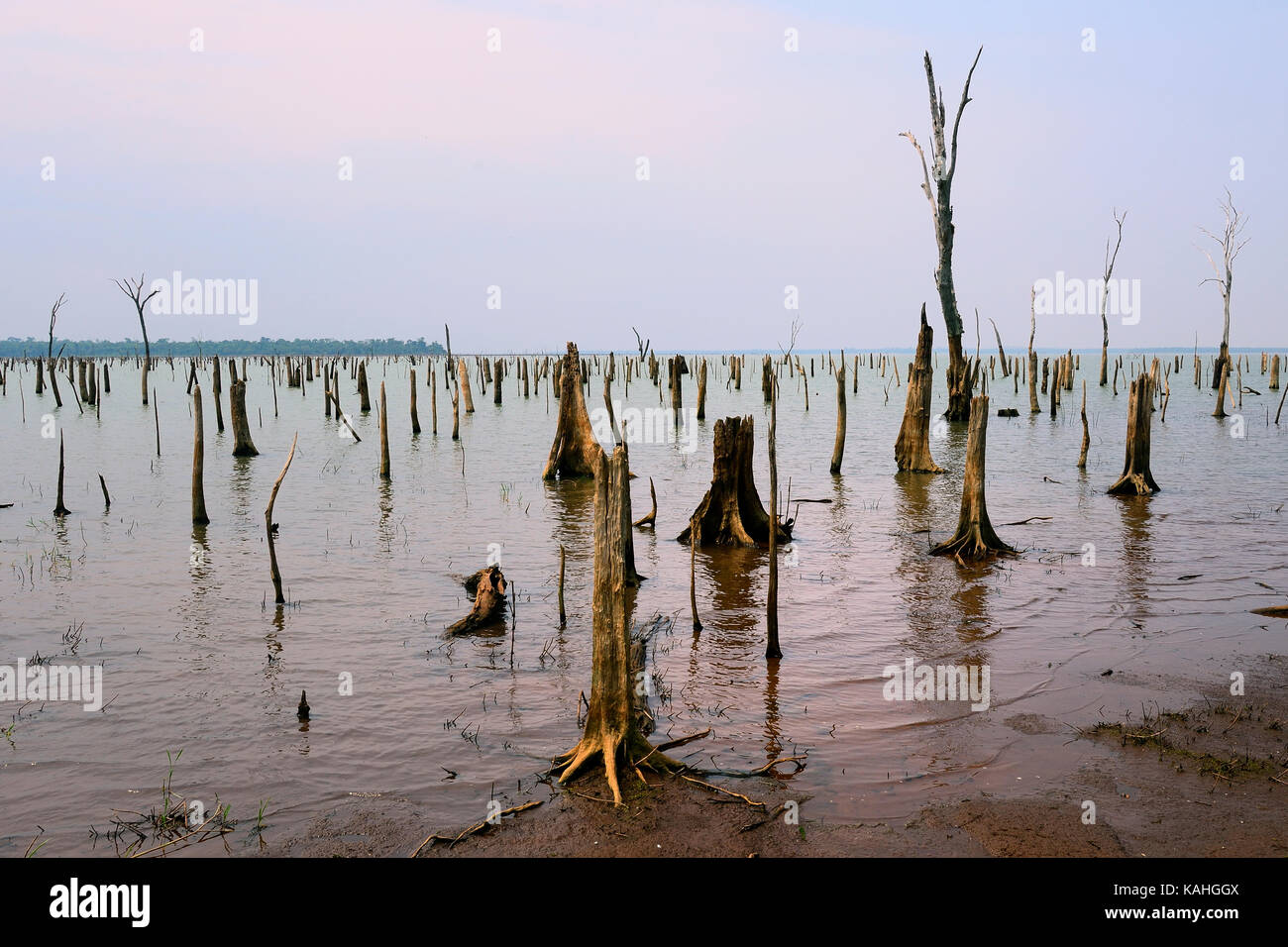 Dead, weathered trees in the Itaipu reservoir, biological reserve Tati Yupi, Hernandarias, Alto Paraná, Paraguay Stock Photo