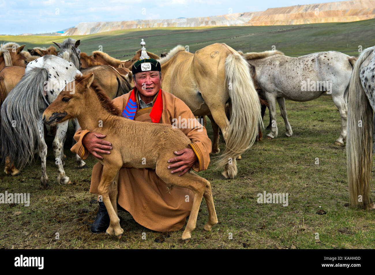Mongolian man, horse shepherd, in traditional dress with foal and herd of horses, Mongolia - Stock Image