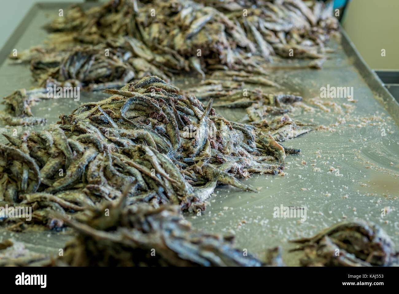 Salted anchovies at the Roque anchovy factory in Collioure France - Stock Image