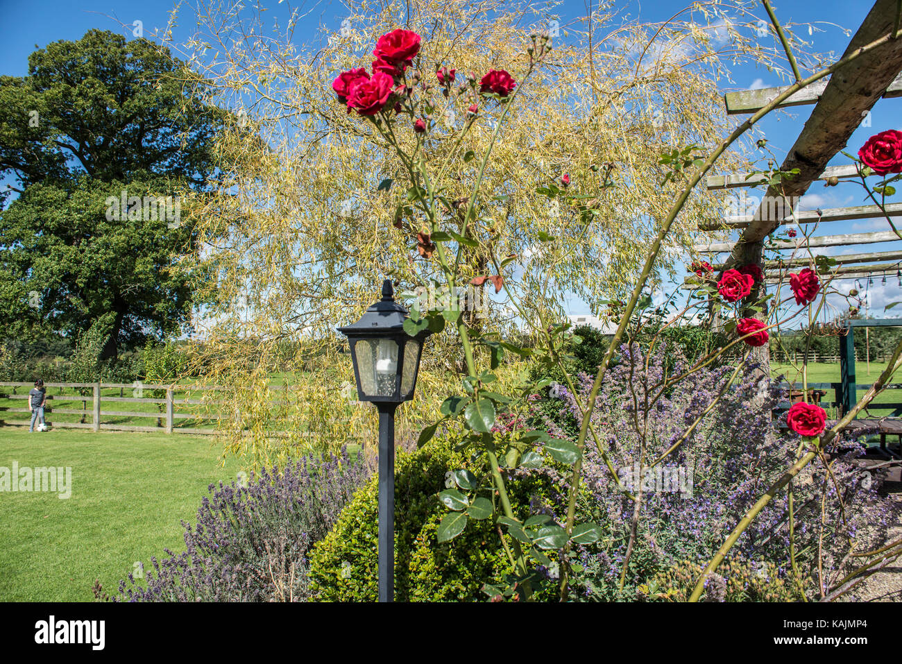 Country Garden, North Yorkshire, England - Stock Image