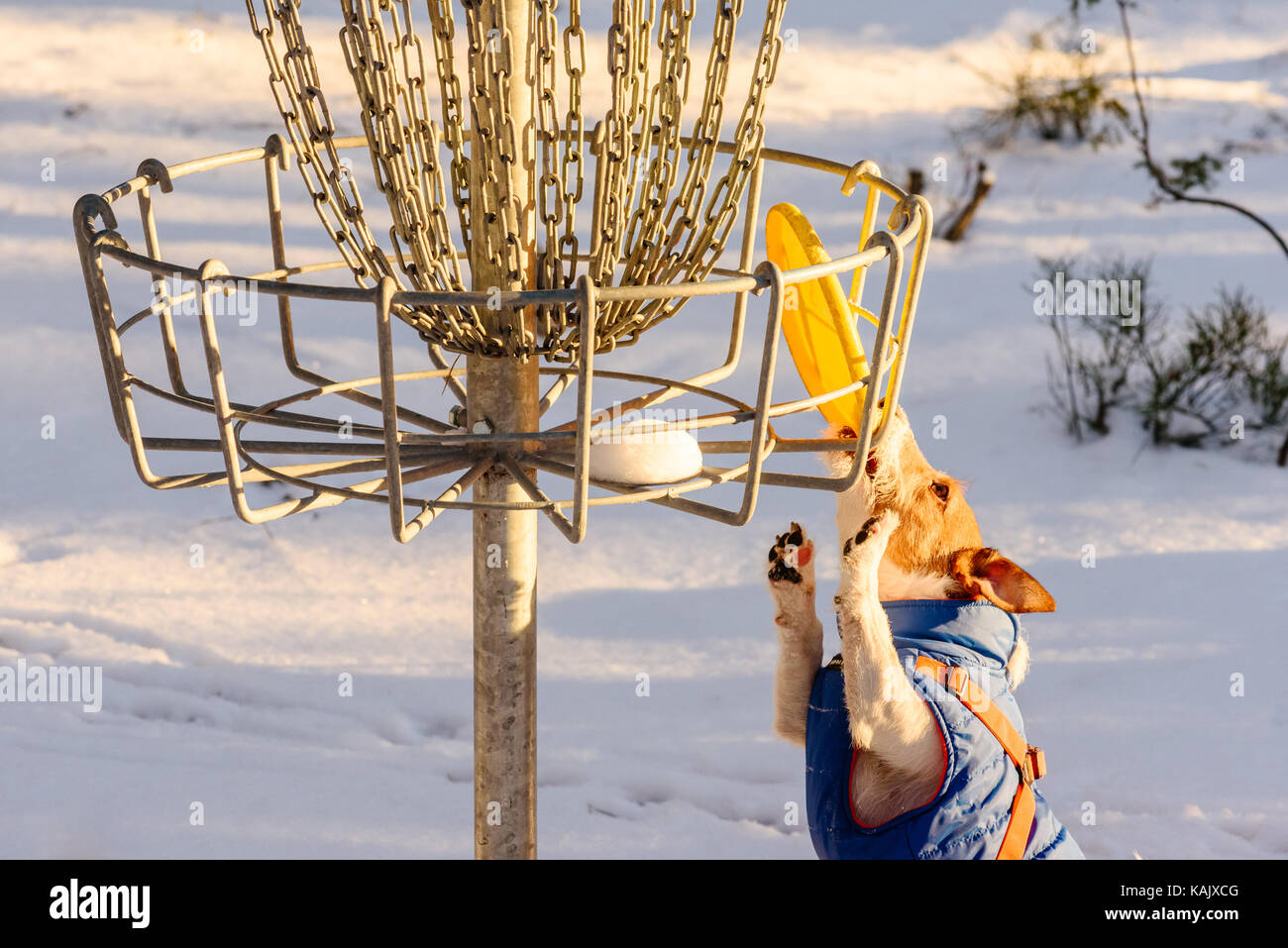 Stalemate tough situation at disc golf playground - Stock Image
