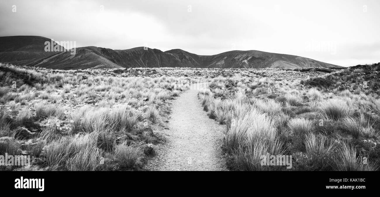 B&W : Trail leading through tussock grassland on a moody day in Tongariro National Park (North Island, New Zealand). - Stock Image