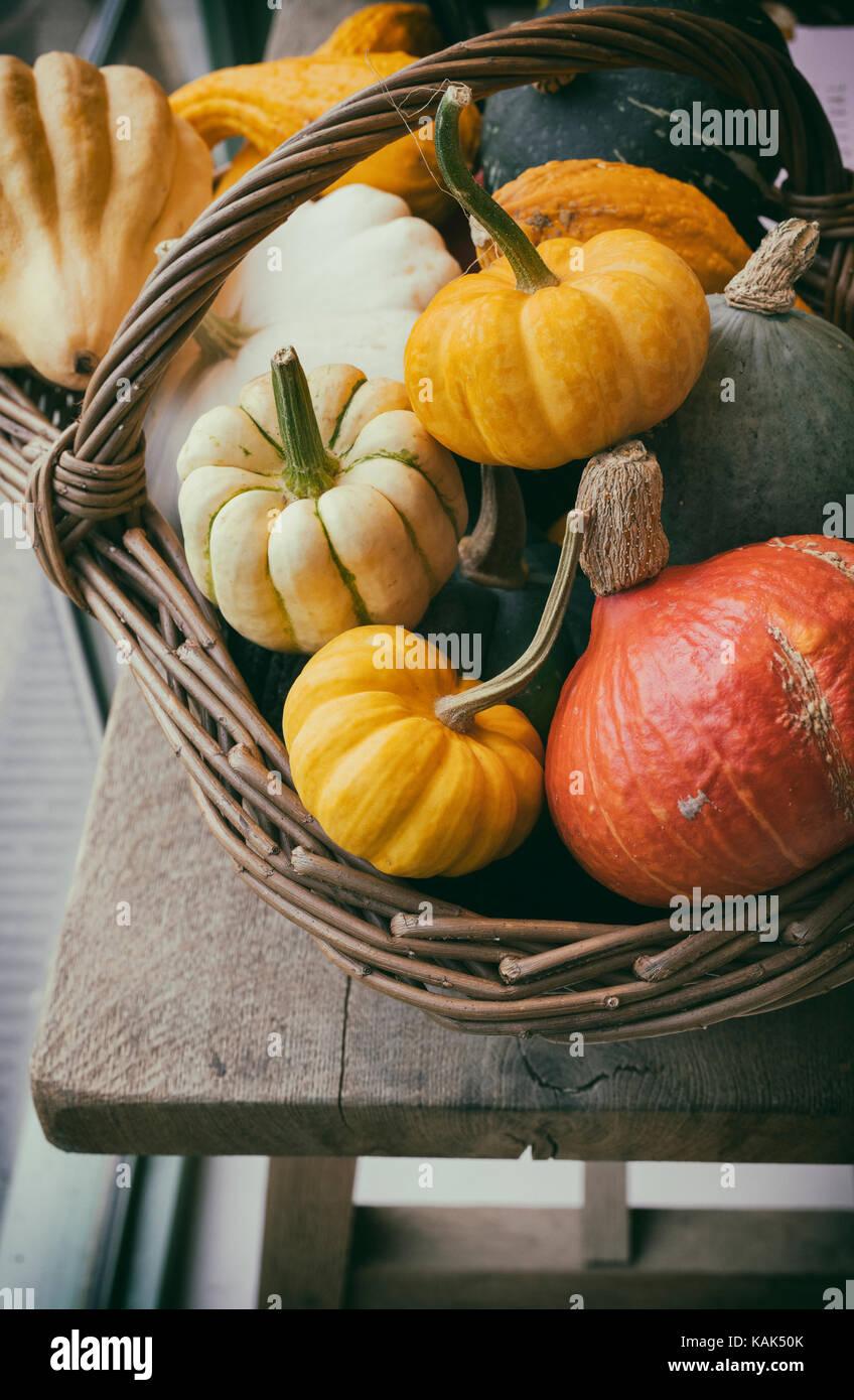 Cucurbita pepo. Basket of ornamental squashes at Daylesford Organic farm shop autumn festival. Daylesford, Cotswolds, - Stock Image