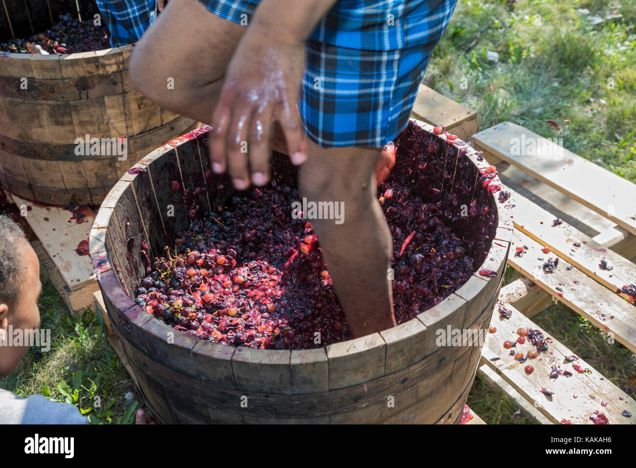 Detroit, Michigan - Children participate in a grape stomping contest at a block party in the Morningside neighborhood. - Stock Image