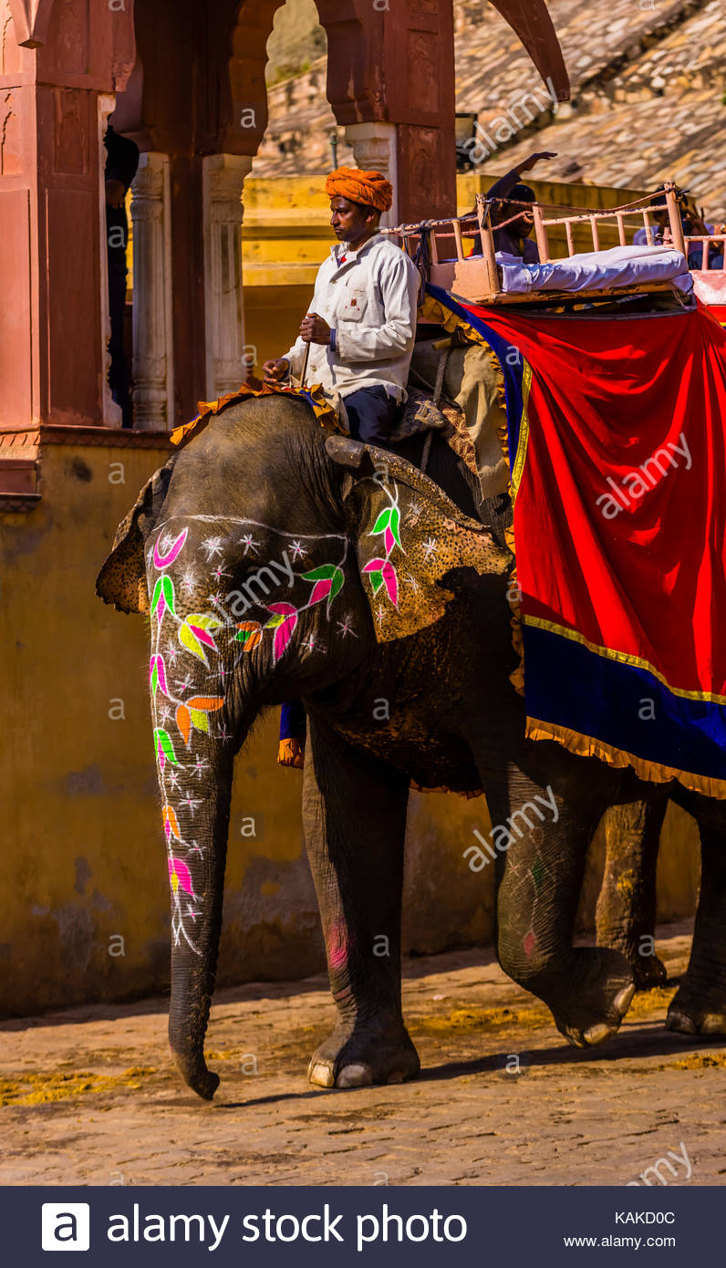 Mahout on painted elephant used to transport tourists to Amber Palace, near Jaipur, Rajasthan, India. - Stock Image