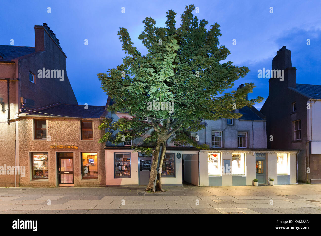 Big Tree, Kirkwall, Orkney - Stock Image