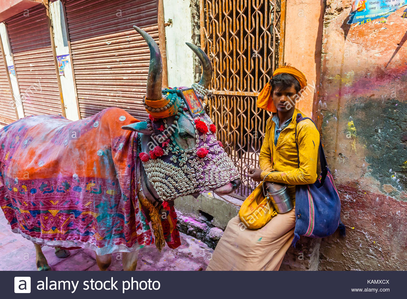 A costumed cow, Holi Festival celebration (Festival of Colors) outside the Banke Bihari Temple, Vrindavan, near Stock Photo