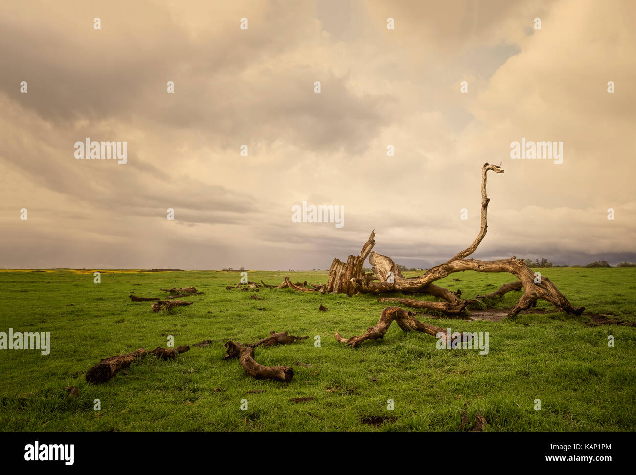 Clouds over a dead tree in an  empty pasture in rural Northern California. - Stock Image