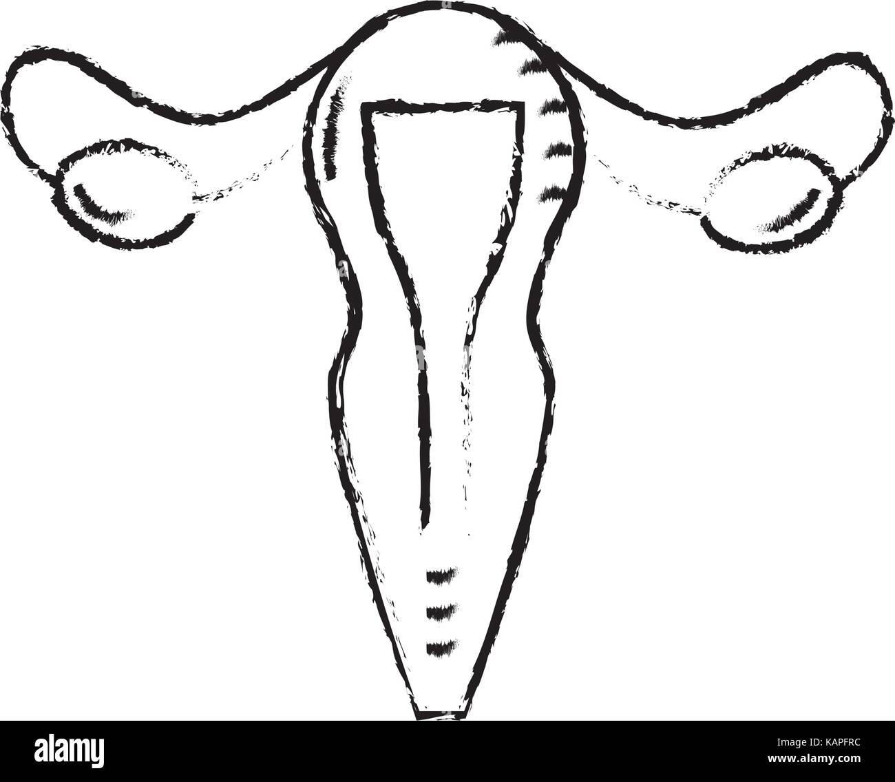 figure uterus fallopian tubes anatomy female Stock Vector Art ...