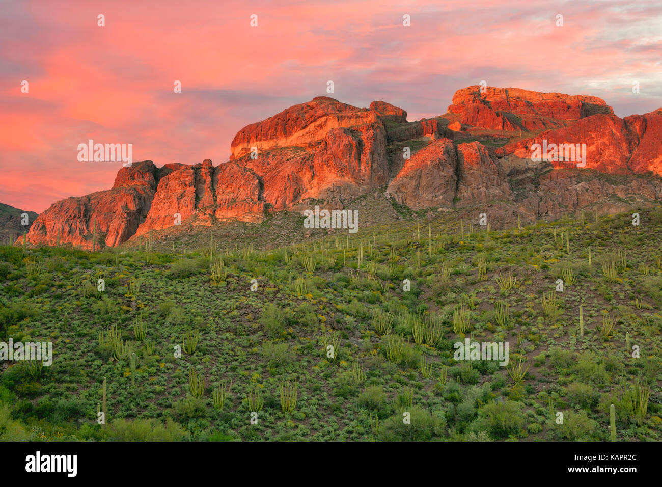 Sunset glow on the Ajo Mountain Range in Arizona's Organ Pipe Cactus National Monument. - Stock Image