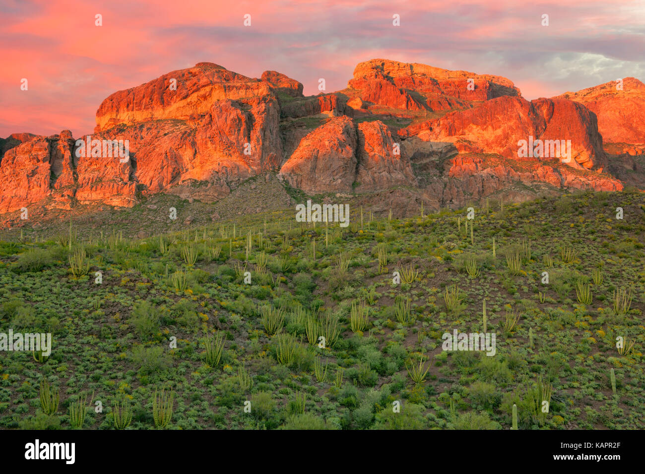 Evening light in Arizona's Organ Pipe Cactus National Monument. - Stock Image