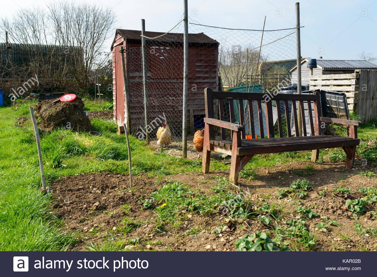 Allotment, Sturminster Newton, Dorset, England, UK - Stock Image