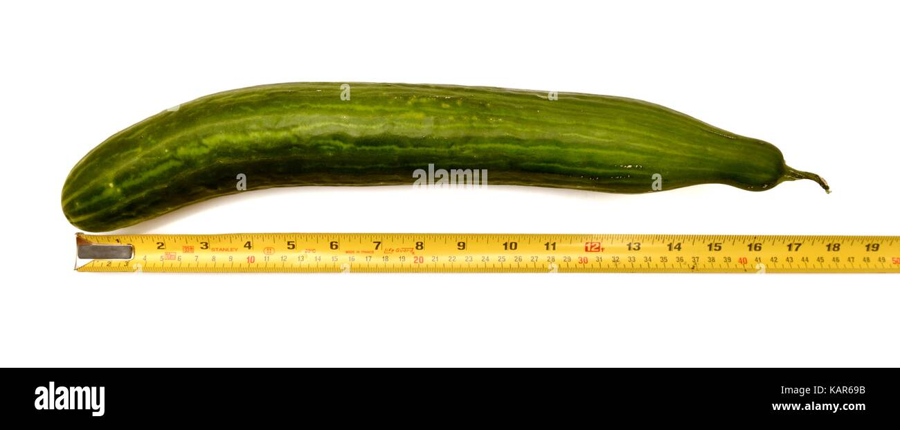 Measuring the length of a large cucumber 17 inches - Stock Image