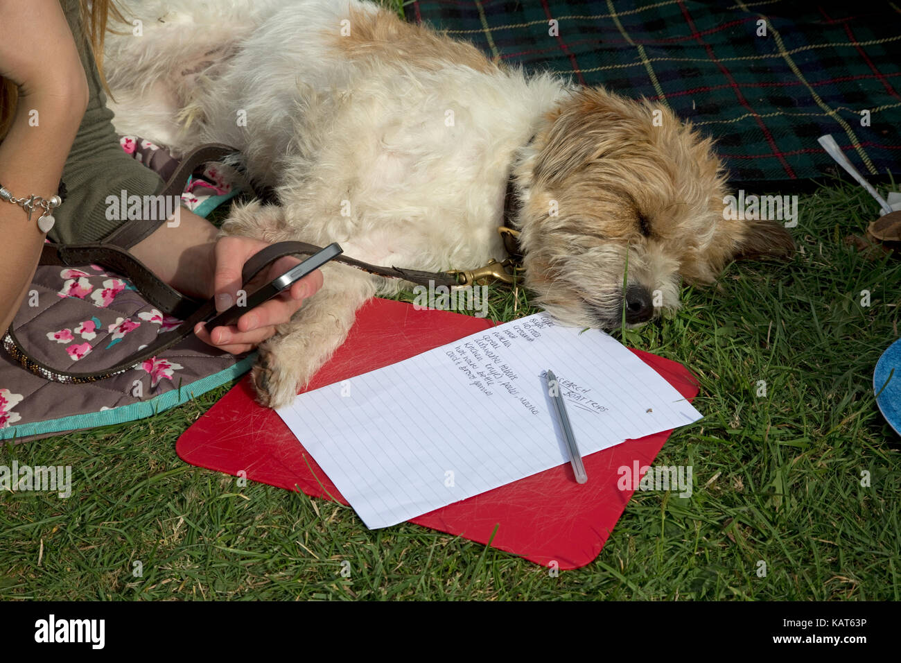 Teenagers hand holding mobile phone sleeping terrier and to do list Cotswolds UK - Stock Image