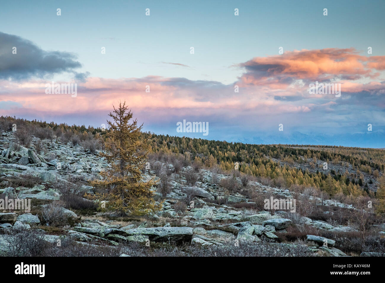 mongolian landscape in fall colours - Stock Image