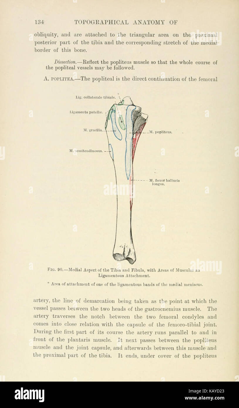 Horse Anatomy Illustration Stock Photos & Horse Anatomy Illustration ...