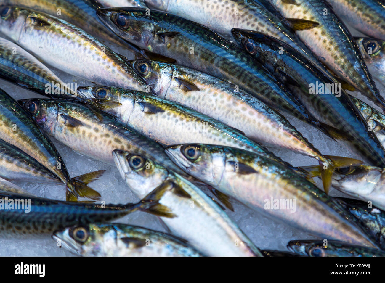 Fresh sardines on ice for sale at a fish market stall, Marseille, France - Stock Image