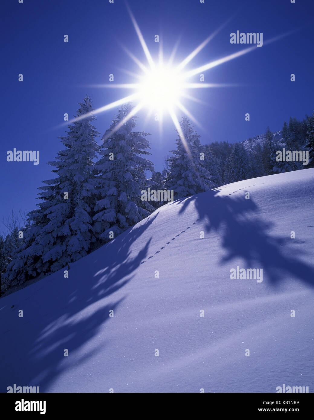 Austria, Tyrol, Söll, Hohe Salve, back light, winter forest, the sun, spruces, - Stock Image