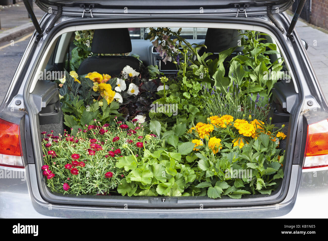 England, London, Columbia Road Flower Market, car, boot, completely with plants, - Stock Image