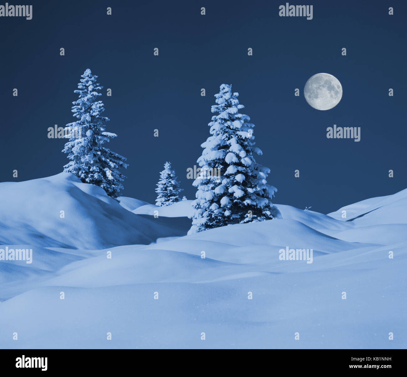 Winter scenery with three spruces, - Stock Image