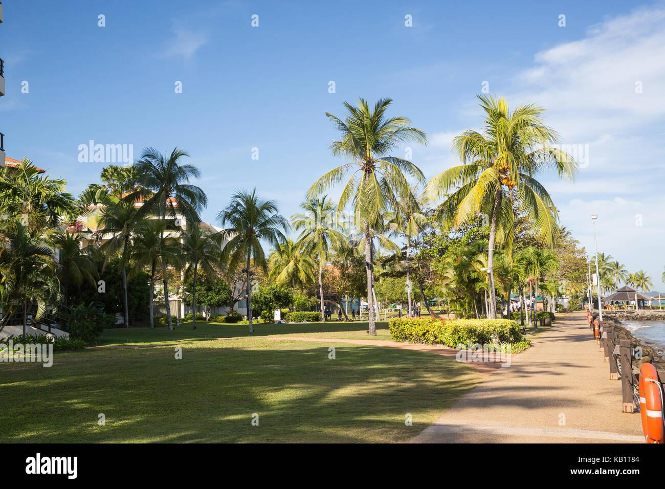 Palm Tree by the beach in Kota Kinabalu - Stock Image