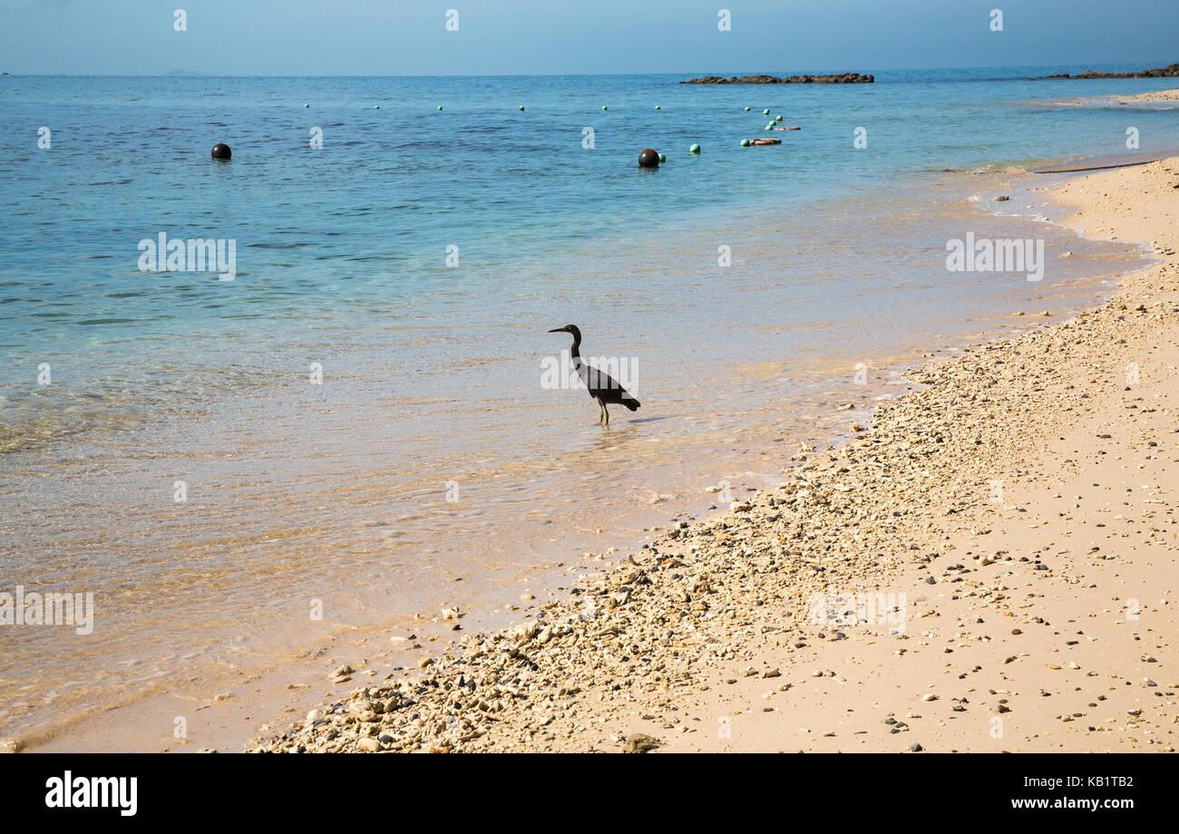A beautiful beach in Kota Kinabalu in Malaysia - Stock Image