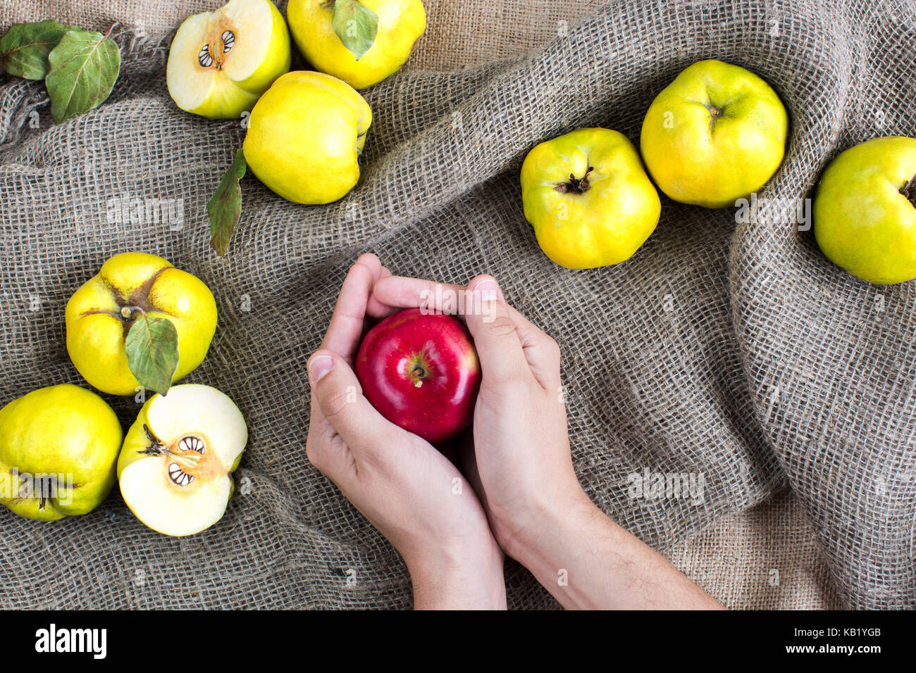 food, nutrition, fairy tales concept. in tender palms of caucasian man there is red apple, treat that witch gave - Stock Image