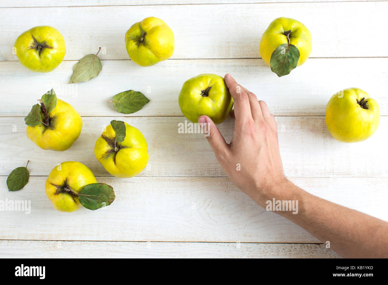 harvesting, autumn, entertainment concept. delicate hand of caucasian man touching yellow green fruits that was - Stock Image