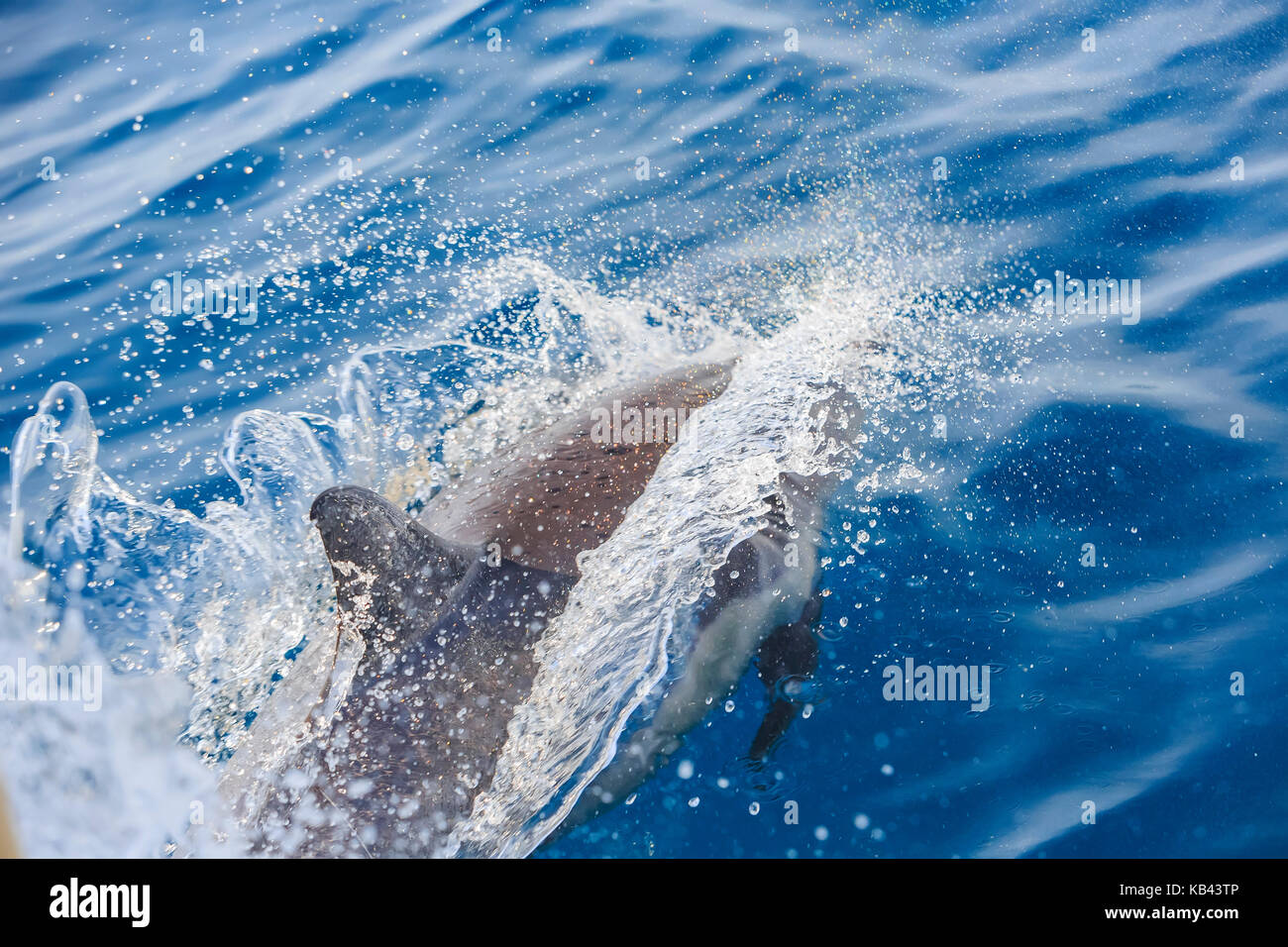 Beautiful dolphin watching at Los Angeles - Stock Image