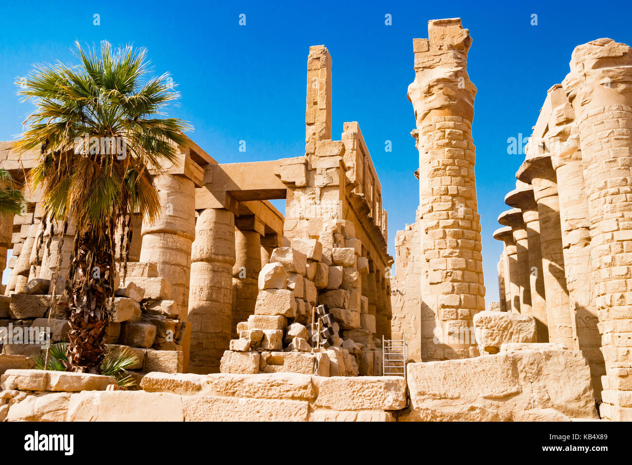 Palm tree near egyptian columns in Luxor, Egypt - Stock Image