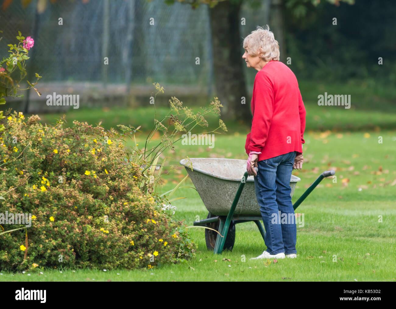 Elderly female gardener pushing a wheelbarrow. Old lady gardening senior. - Stock Image