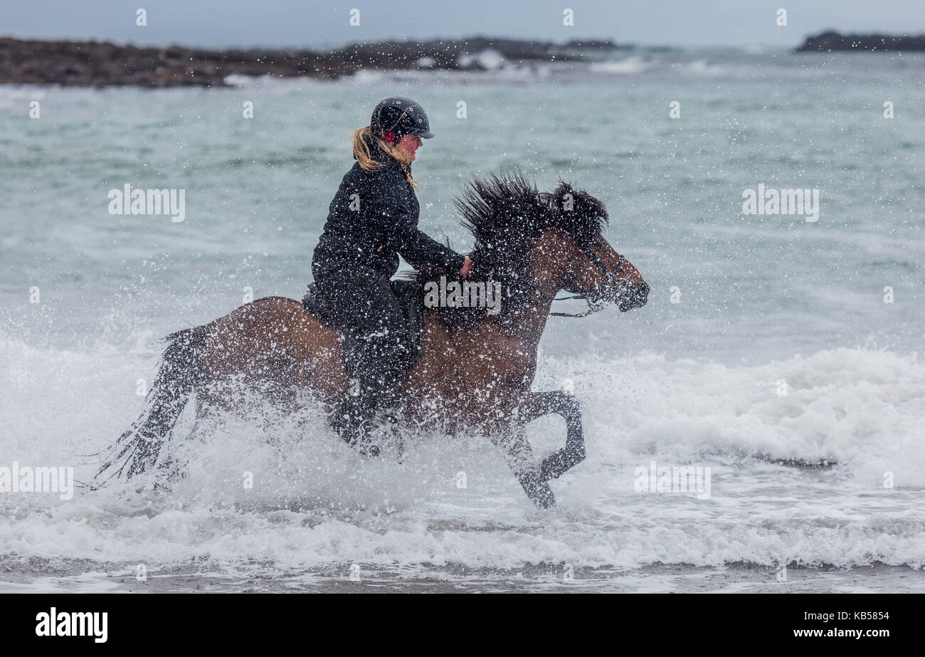 Horseback riding on the coast, Iceland Icelandic horse and rider at Longufjorur beach, Snaefellsnes Peninsula, Iceland - Stock Image