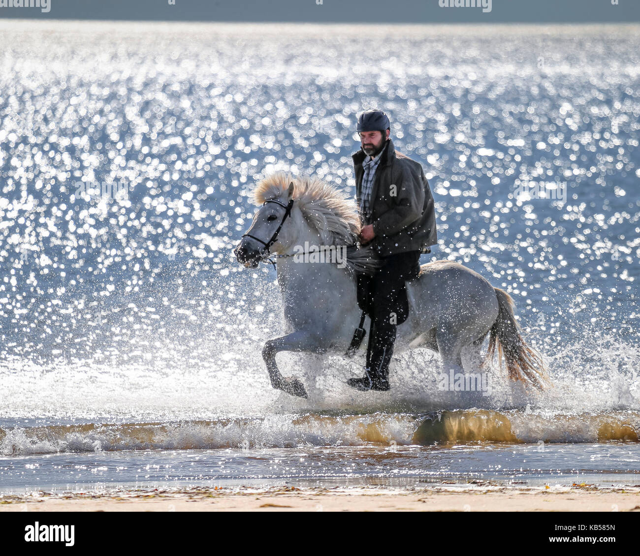 Horseback riding on Longufjordur Beach, Snaefellsnes Peninsula, Iceland - Stock Image