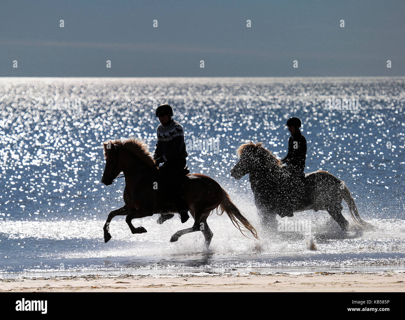 Horseback riding on Longufjorur Beach, Snaefellsnes Peninsula, Iceland - Stock Image