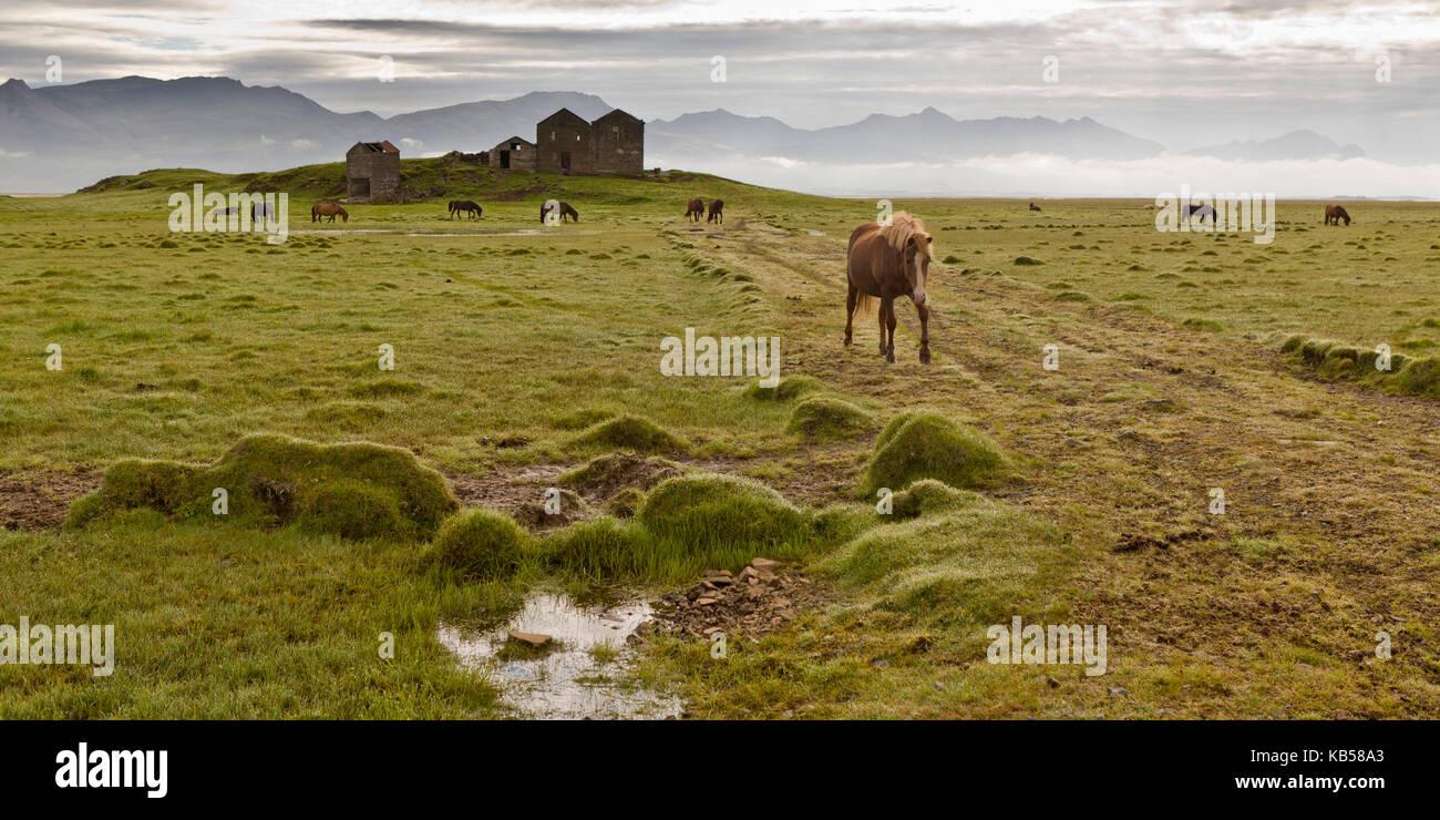 Horses grazing by Vidbordssel- abandon farm, Hornafjordur, Iceland - Stock Image