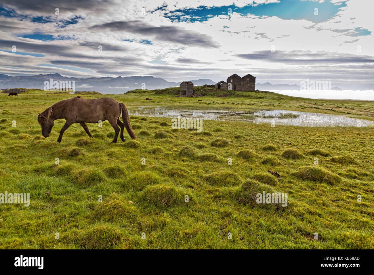 Horse grazing by Vidbordssel- abandon farm, Hornafjordur, Iceland - Stock Image