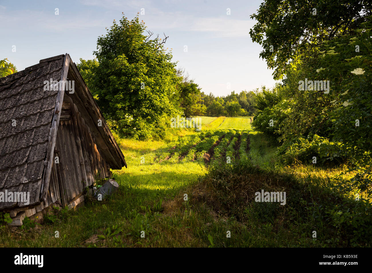 Europe, Poland, Podlaskie Voivodeship, Knyszynska Forest Stock Photo