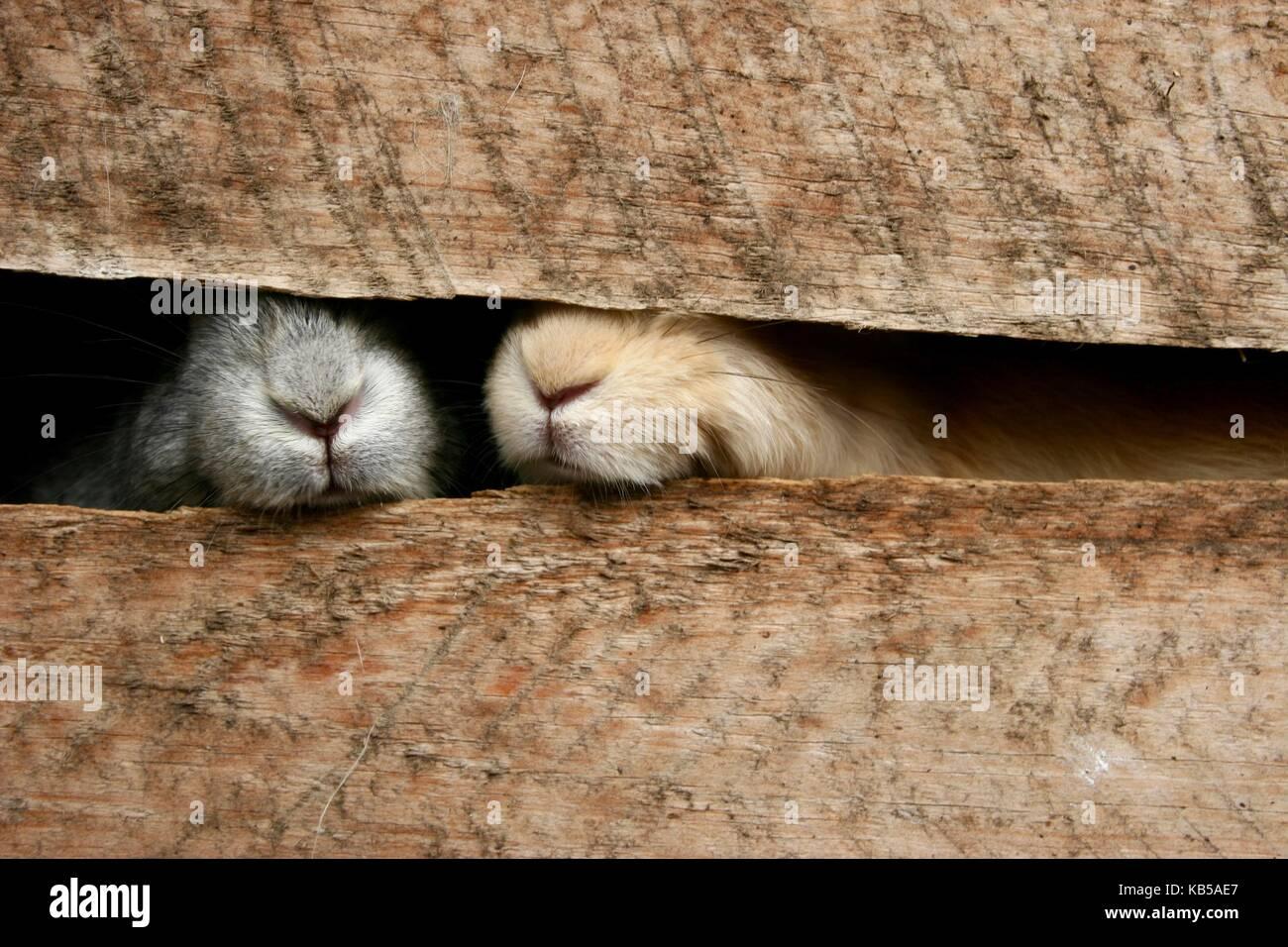 Two bunnies peep their noses through their cage - Stock Image
