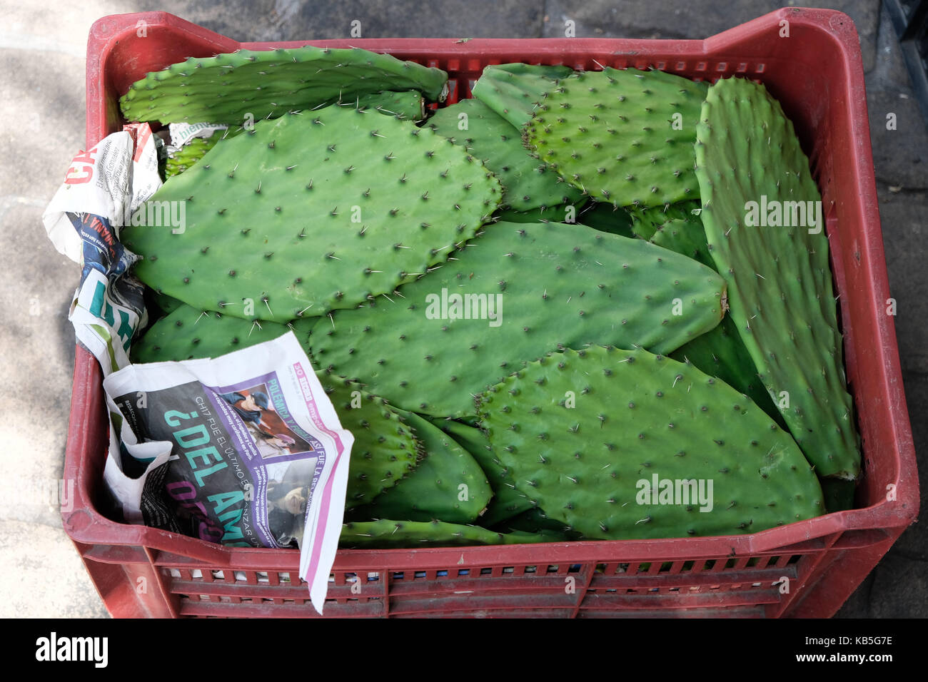 A crate full of cactus sits on the floor of a market in Mexico City, Mexico. - Stock Image